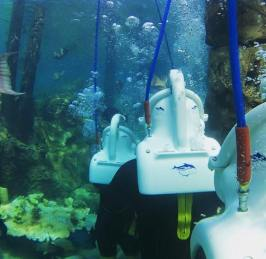 Discovery Cove Seaventure
