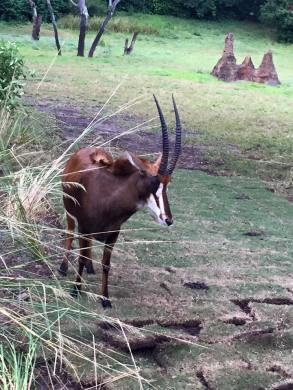 Disney Animal Kingdom Kilimanjaro Safari